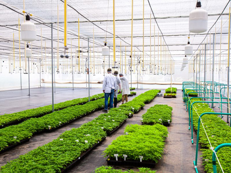cuttings production